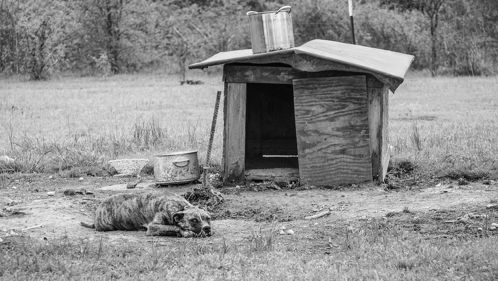 RL's nephew, Joon, had a trailer on land back in the woods just outside Como, Mississippi.  Joon's yard was a common spot for RL to set up and hold hill country blues parties.  Here's Joon's dog resting between sets during one of RL's yard parties. Joon has since moved.