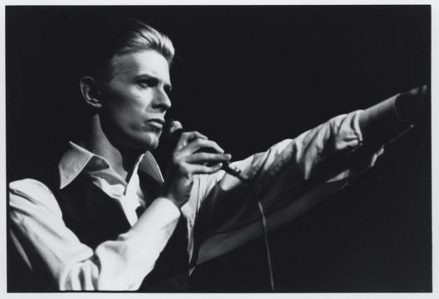 David Bowie To Open Pet Shop